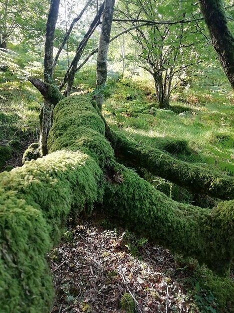 moss small.jpg