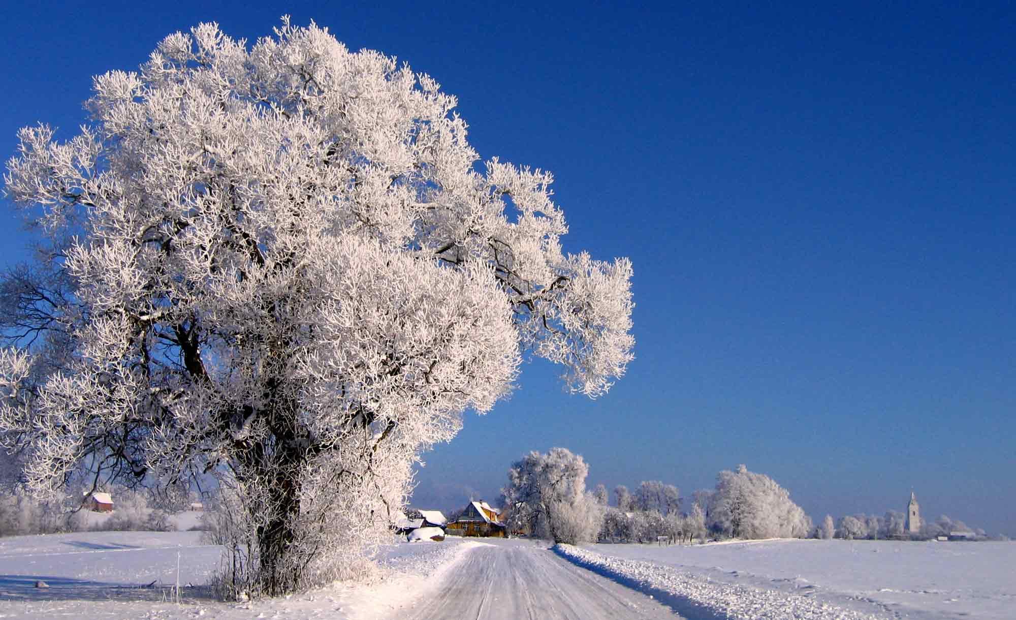 winter 26.jpg
