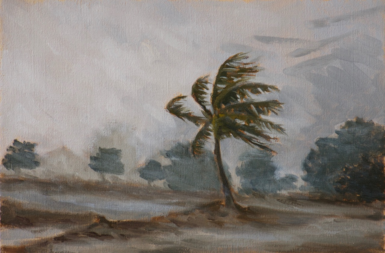 Palm Tree in Hurricane