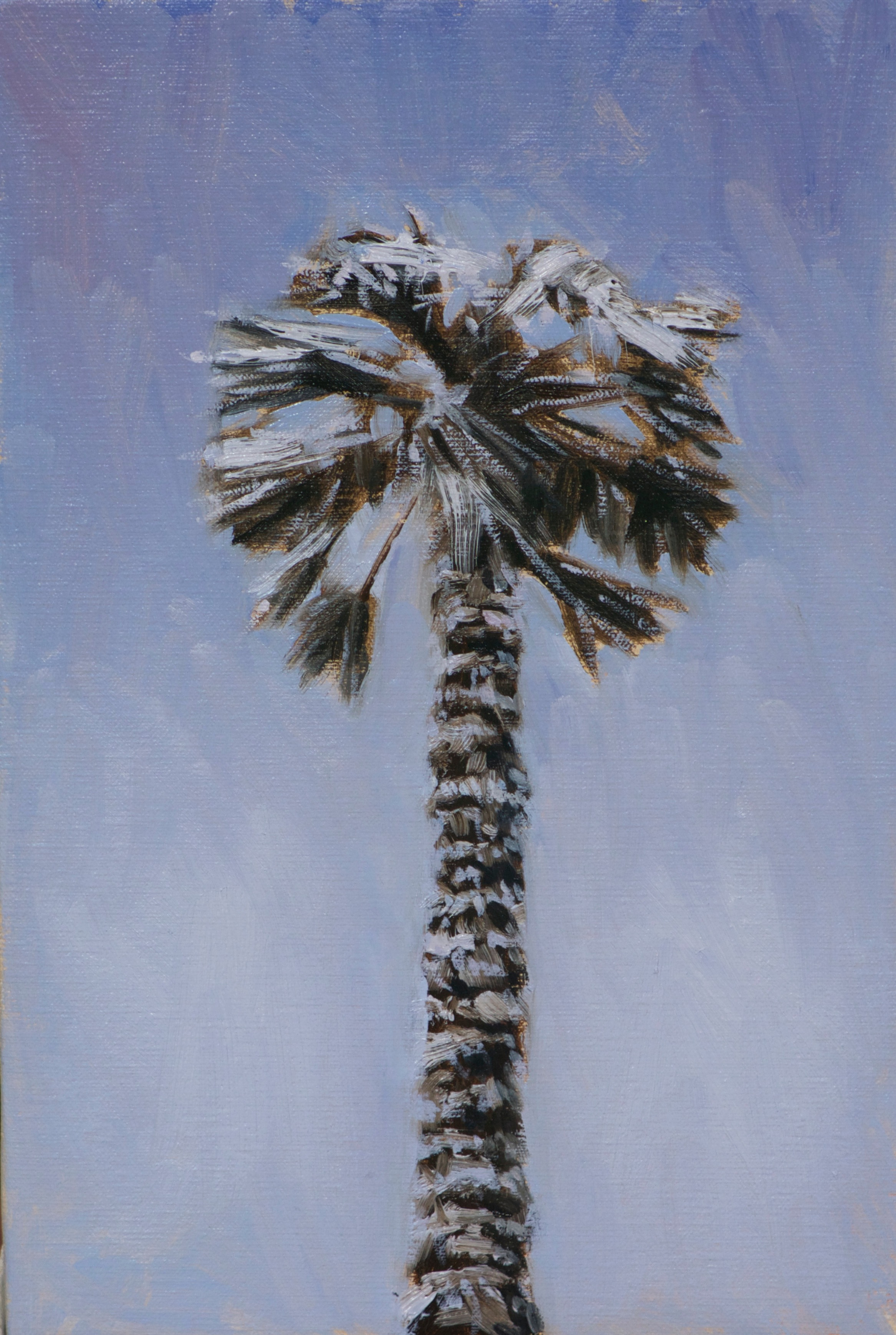 Palm Tree in Snow