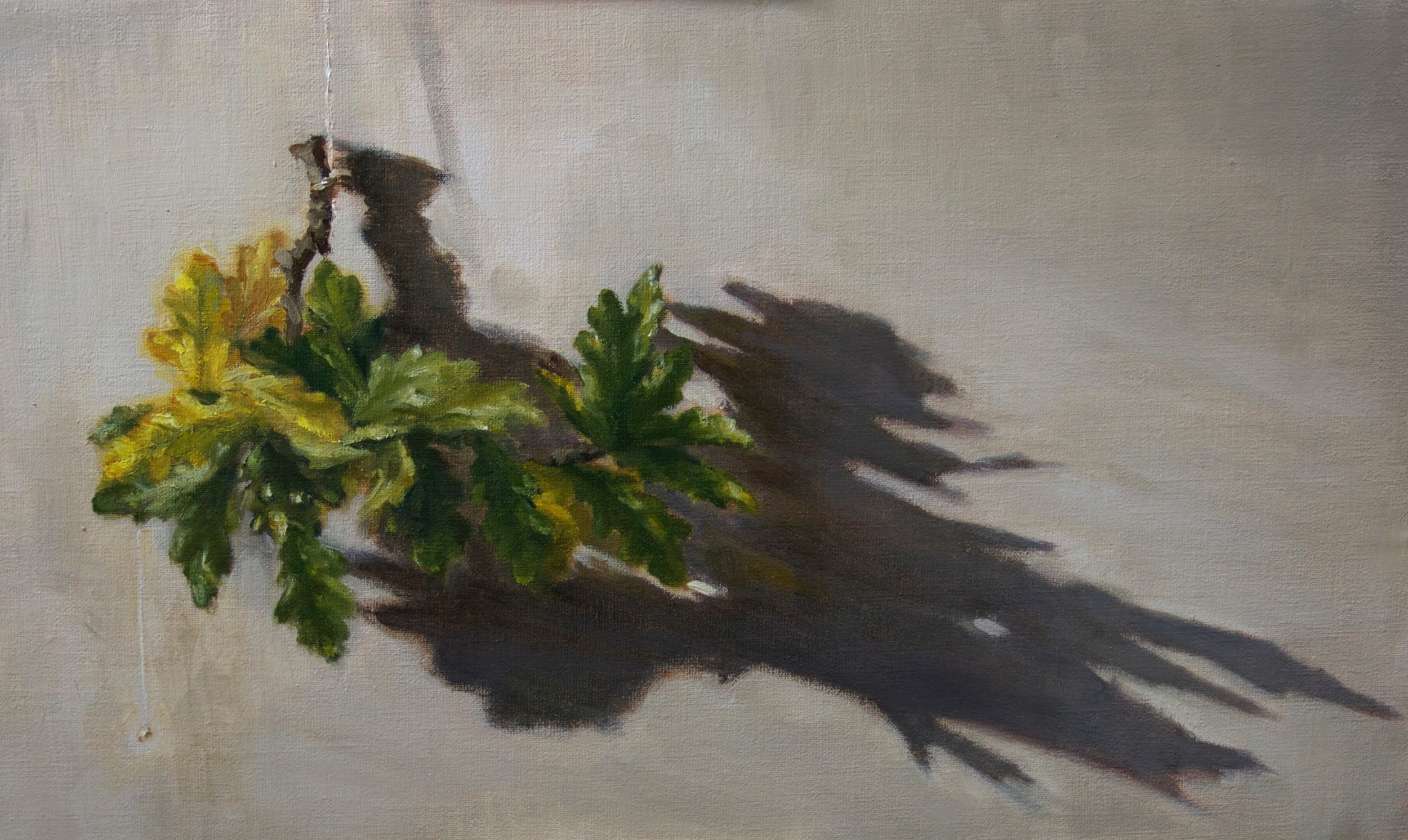 Oak Leaves and Shadows