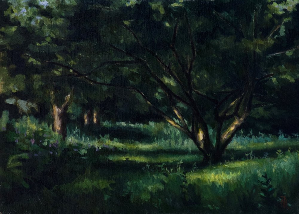 Woodland, Late Afternoon