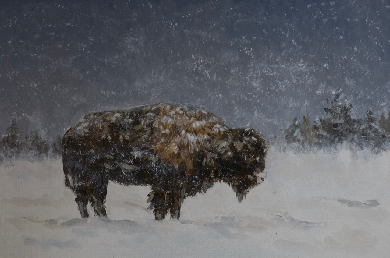 Bison in Snow, 20cm x 30cm