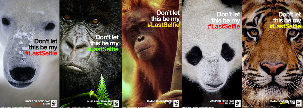 Photo courtesy of WWF