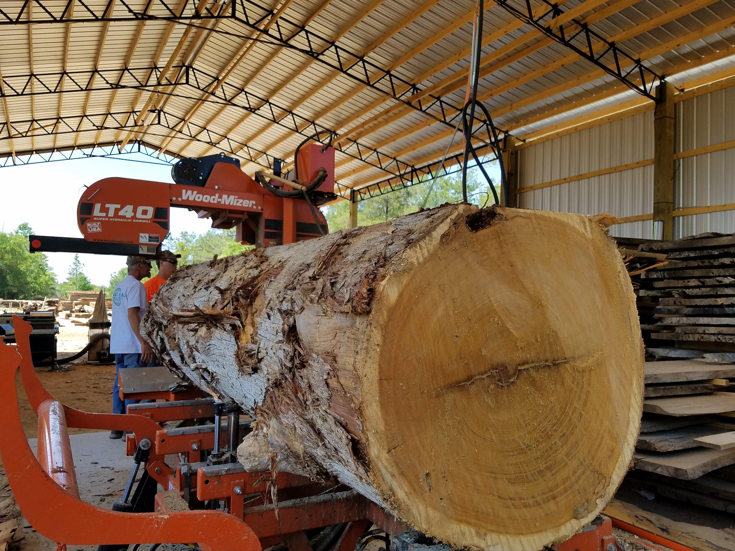 Cypress Log on LT40