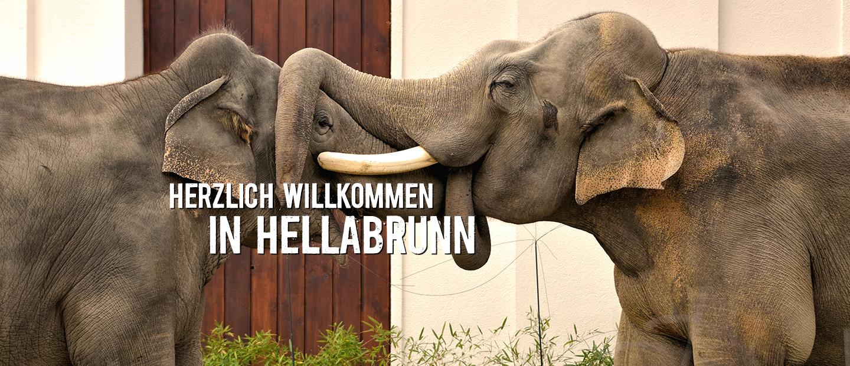 Elefantenteaser_Dekstop_de.png