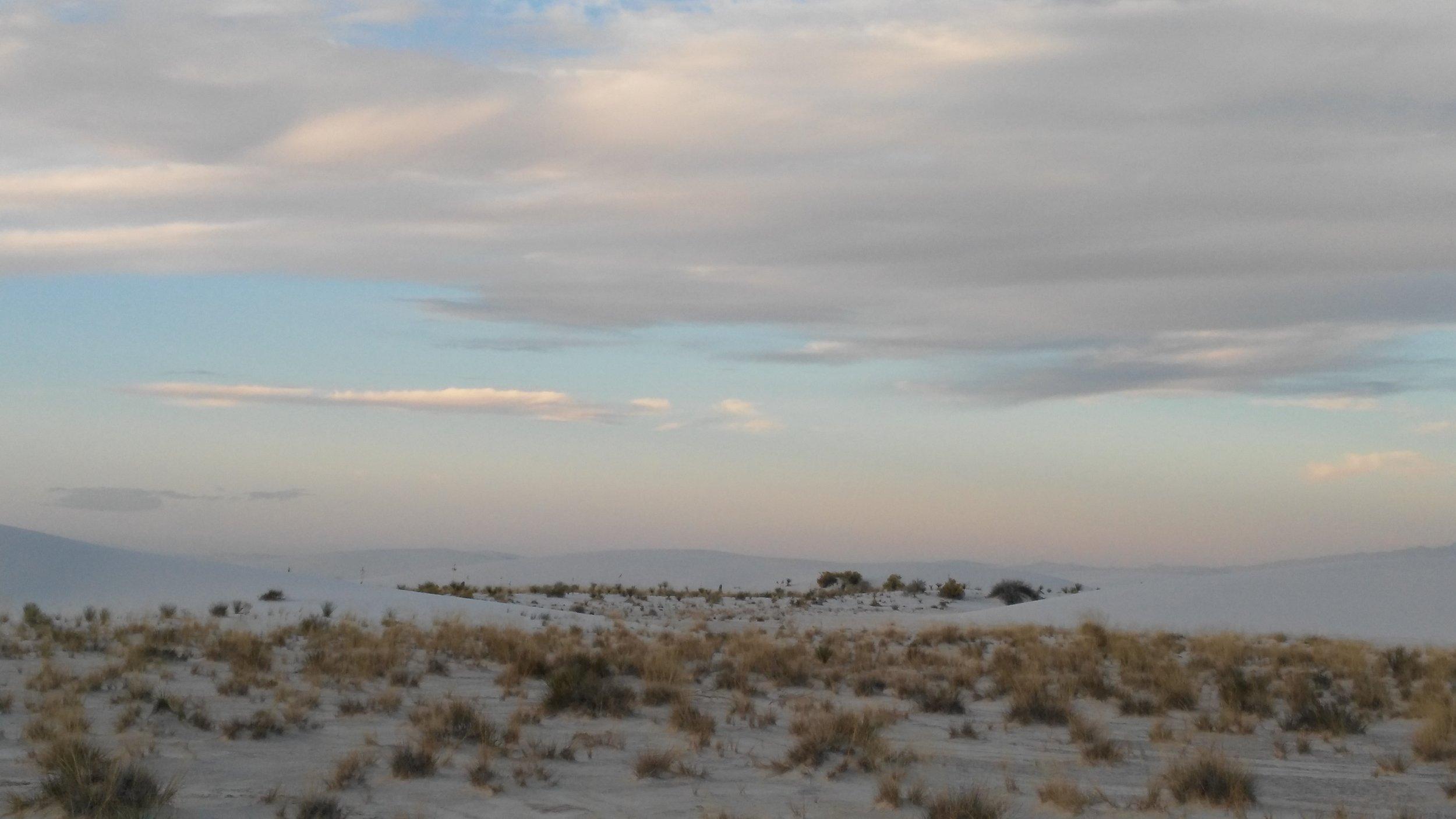 White Sands vegetation.jpg