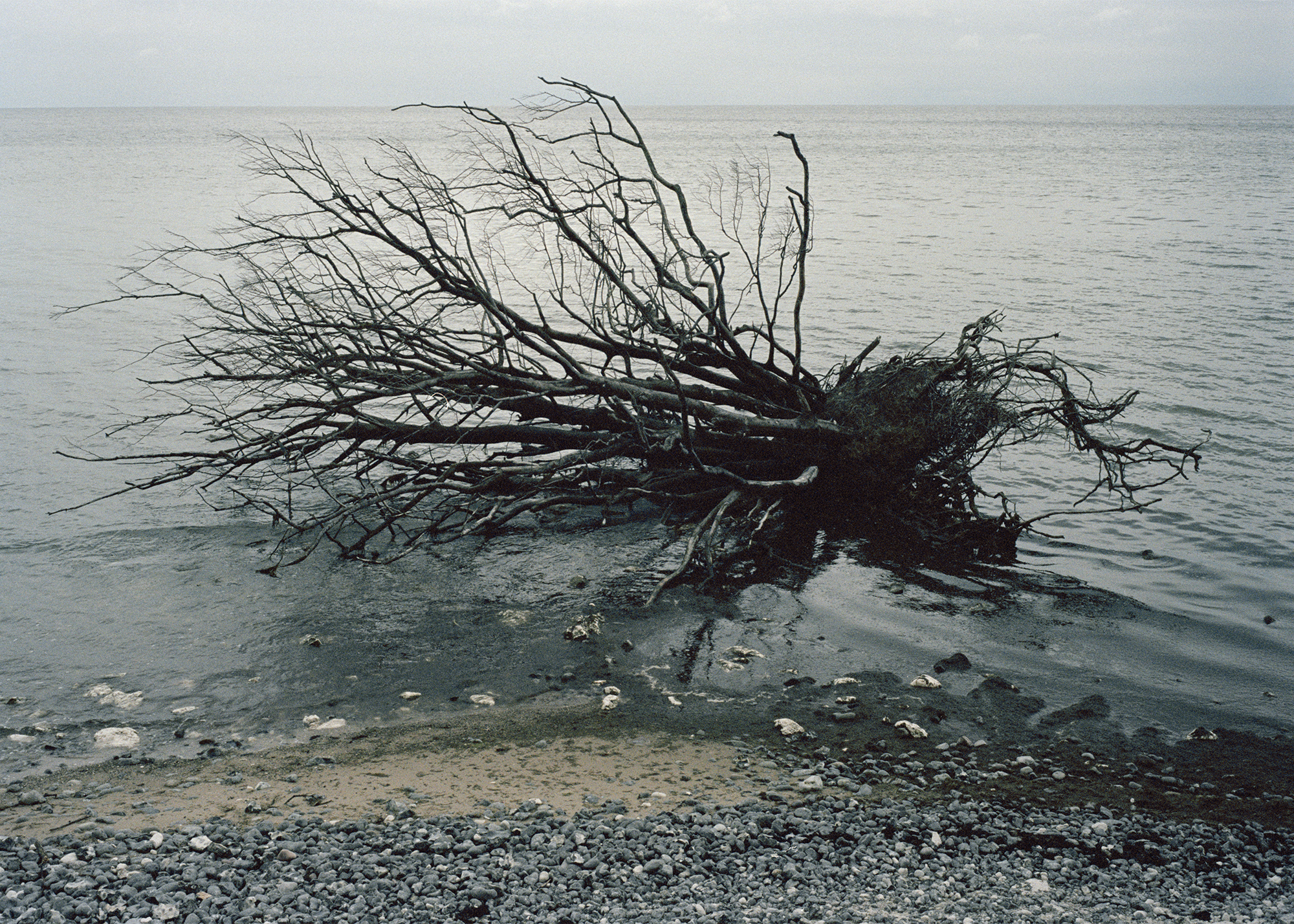 11_dead_tree_in_sea.jpg
