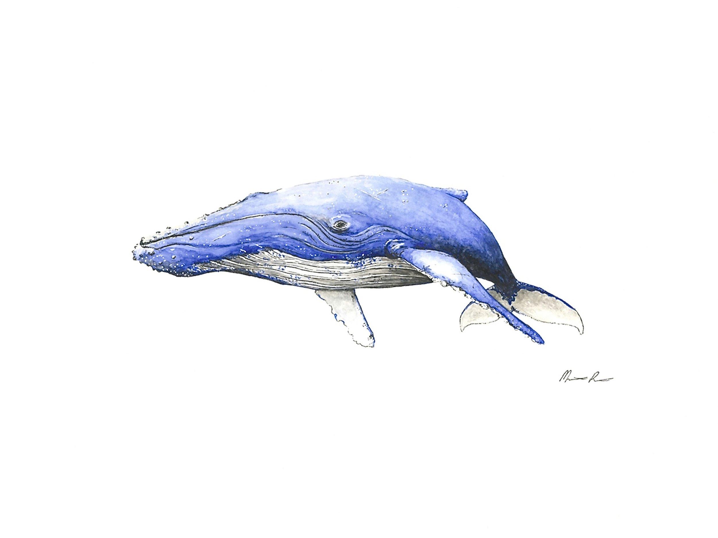 Humpback Whale - Dark Blue - 12