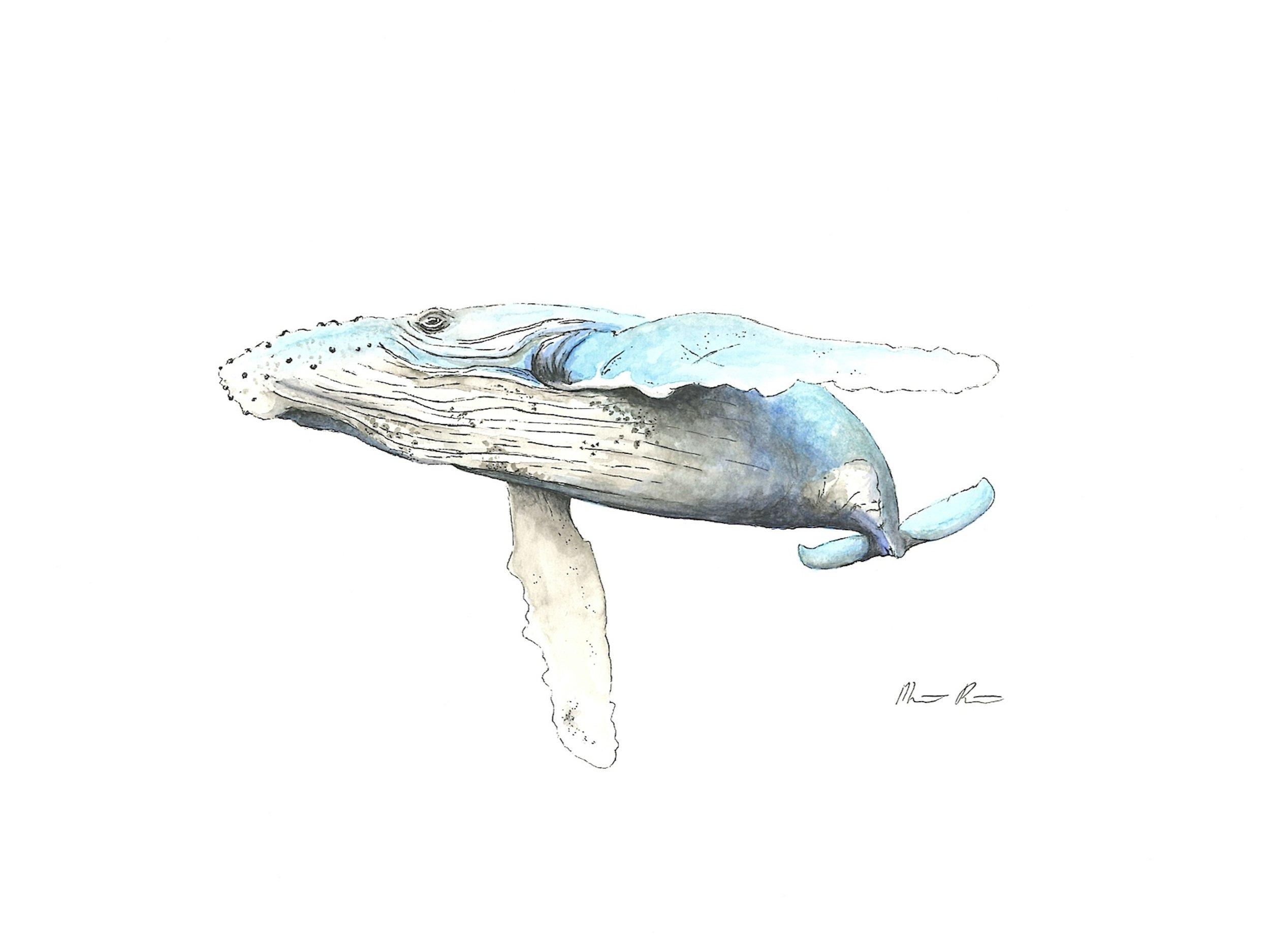 Humpback WHale - Blue - 12