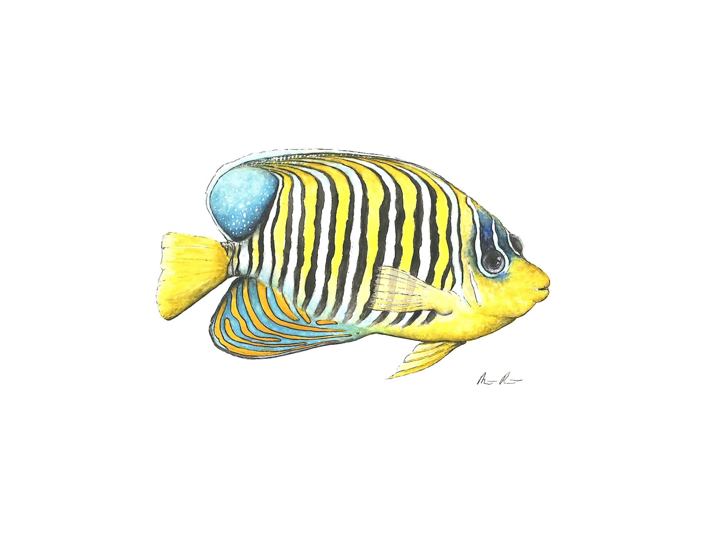 Angel Fish - 12'' x 9