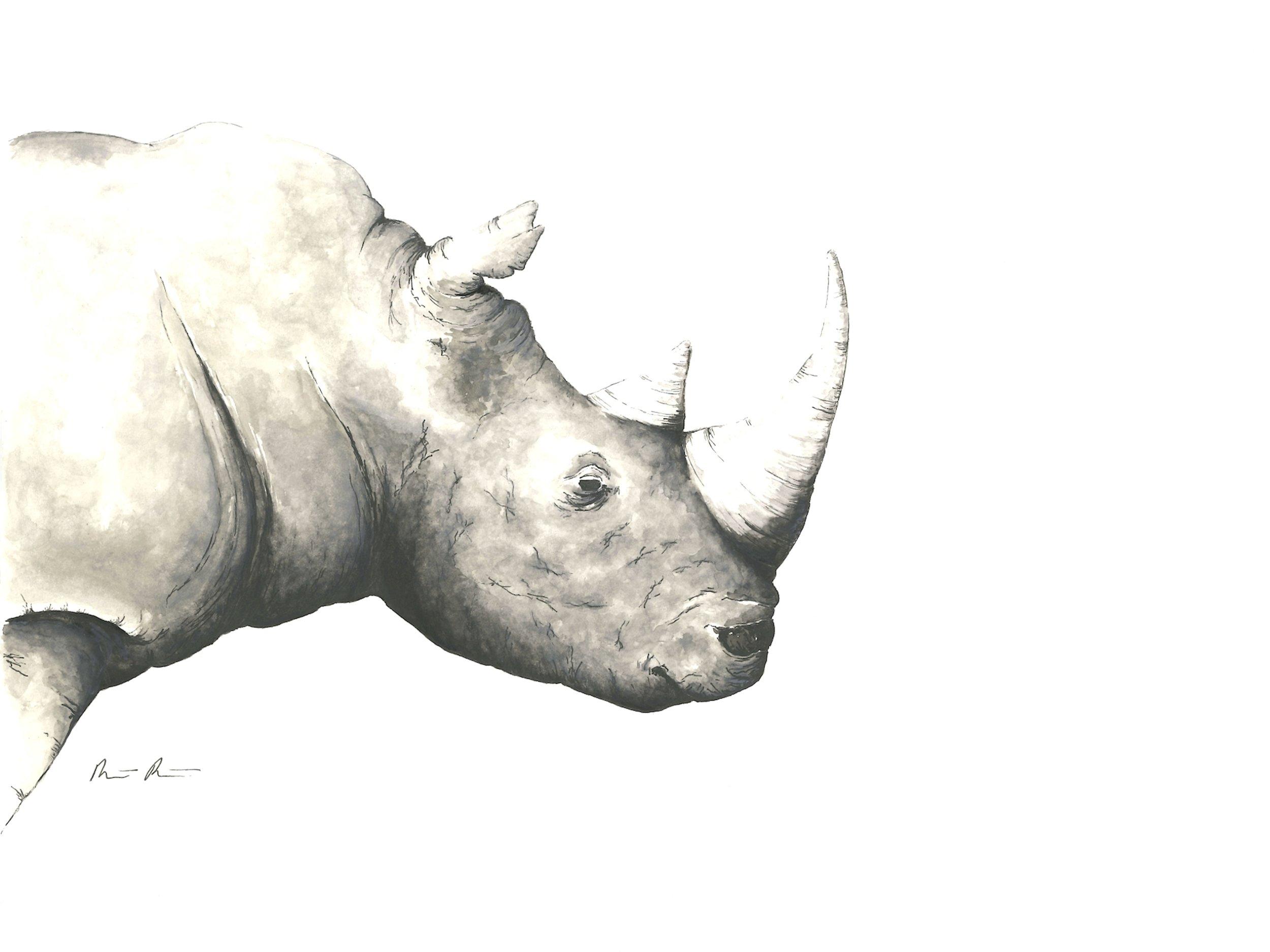 Rhino - 12