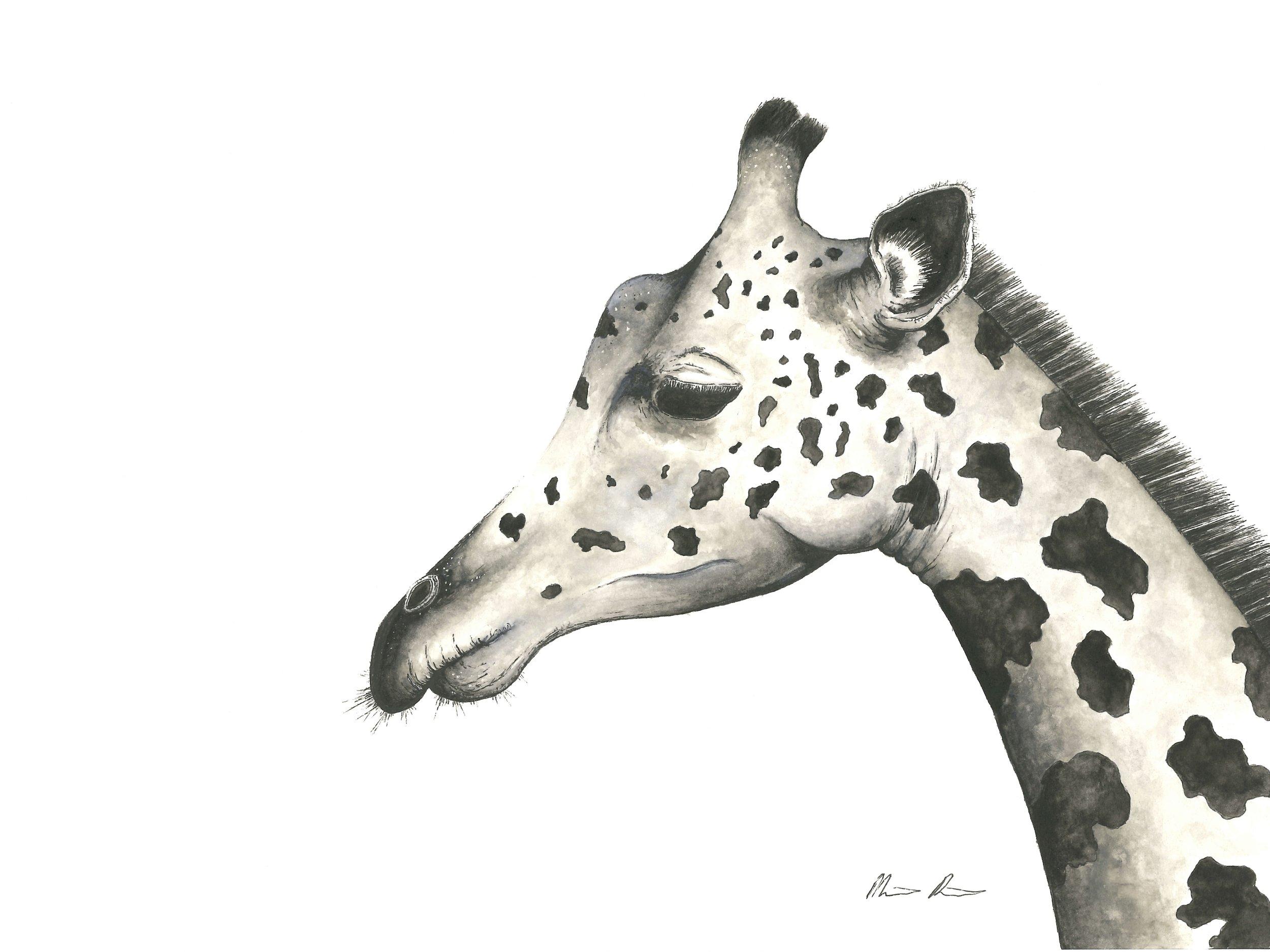 Giraffe - 12