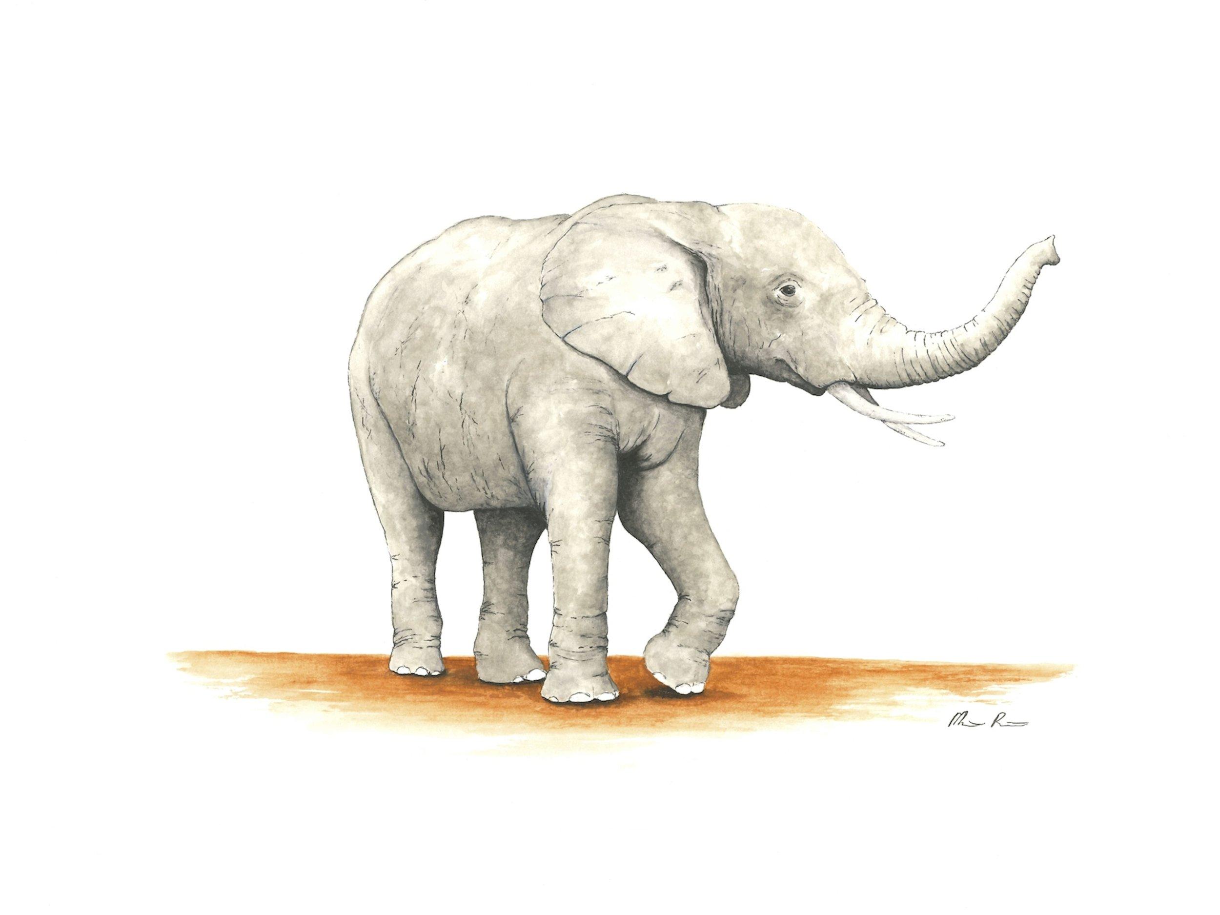 Elephant - 12