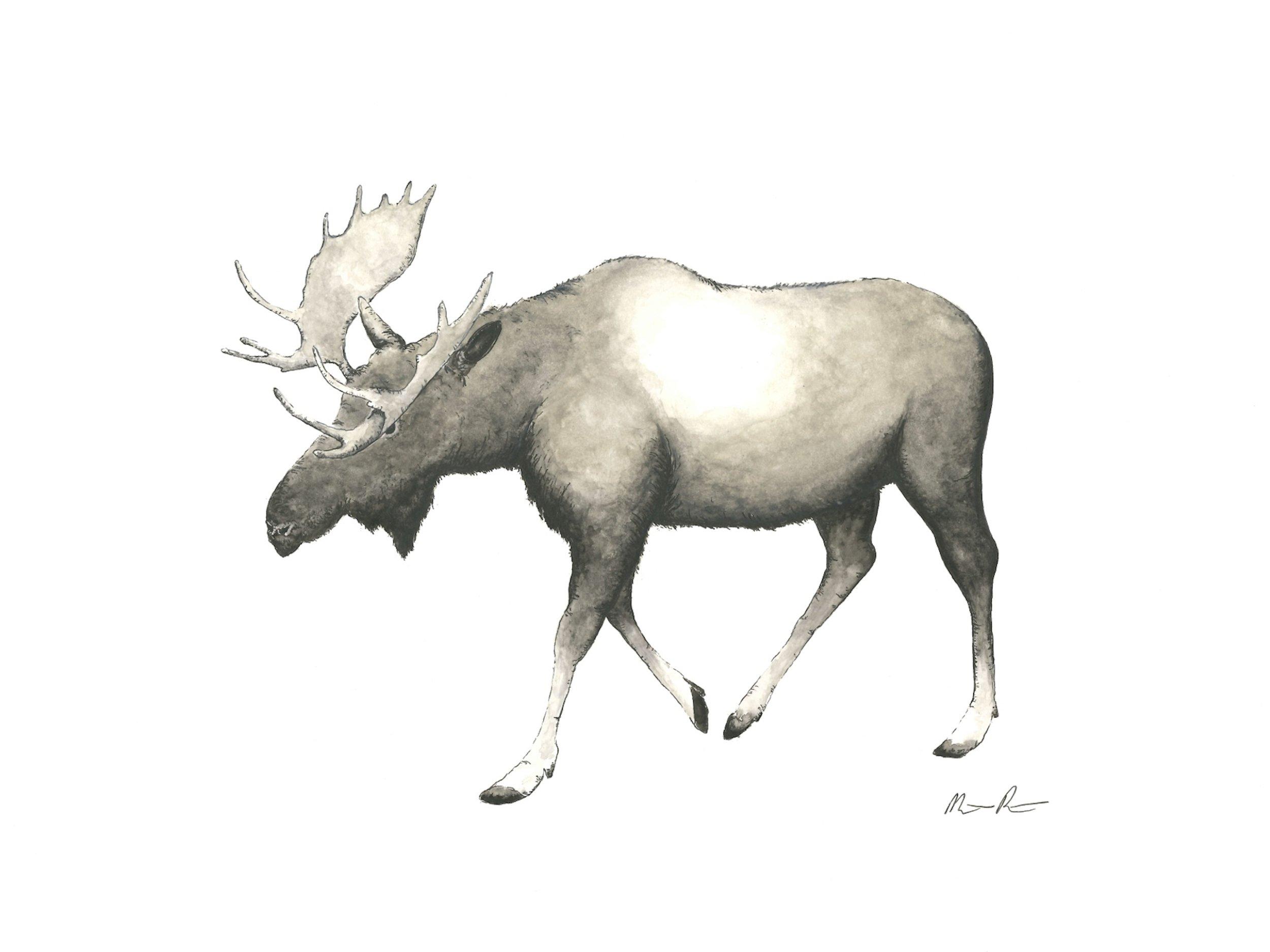 Moose - 12