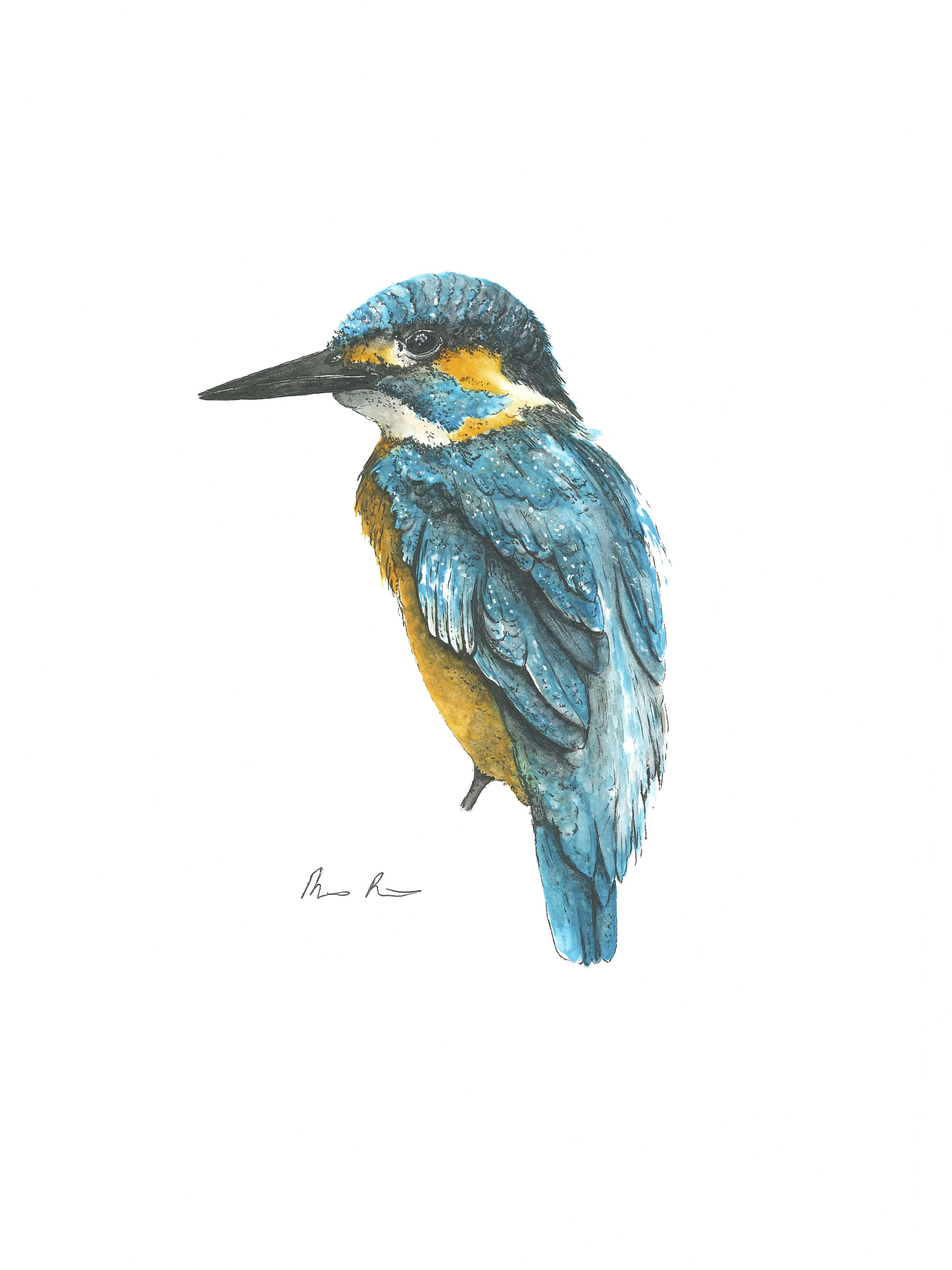 King Fisher - 9