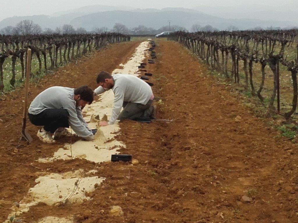 Agriculture de conservation en viticulture