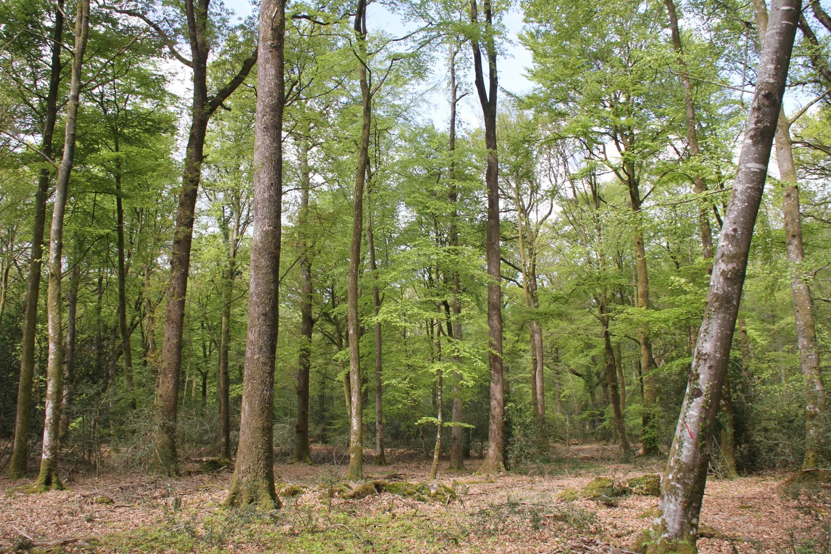 Forêt française 1.png
