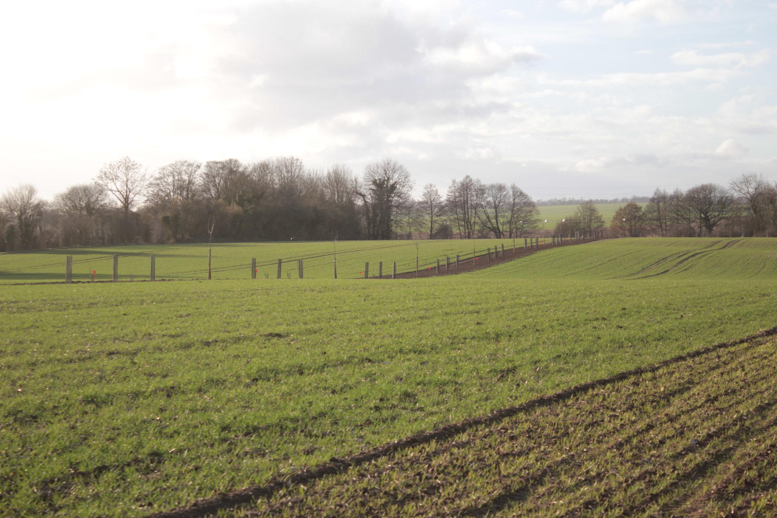 Agroforesterie et élevage bovin