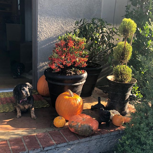 We are getting ready for Halloween 🎃 🎃