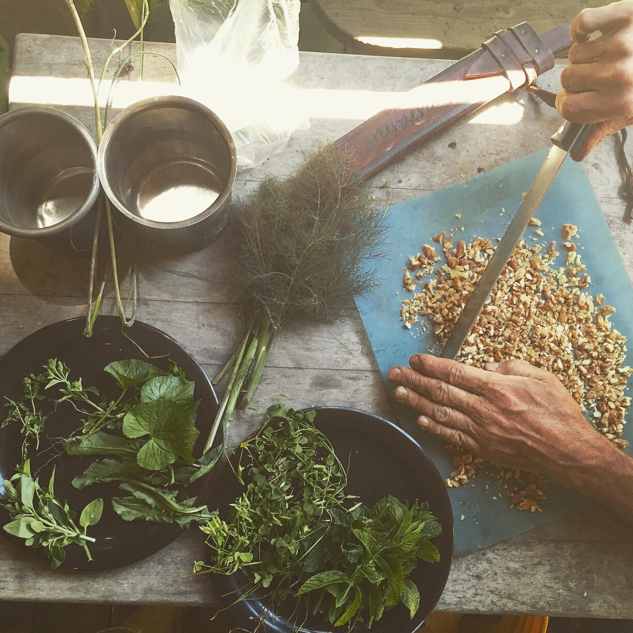 Wild edible & Medicinal Plants -