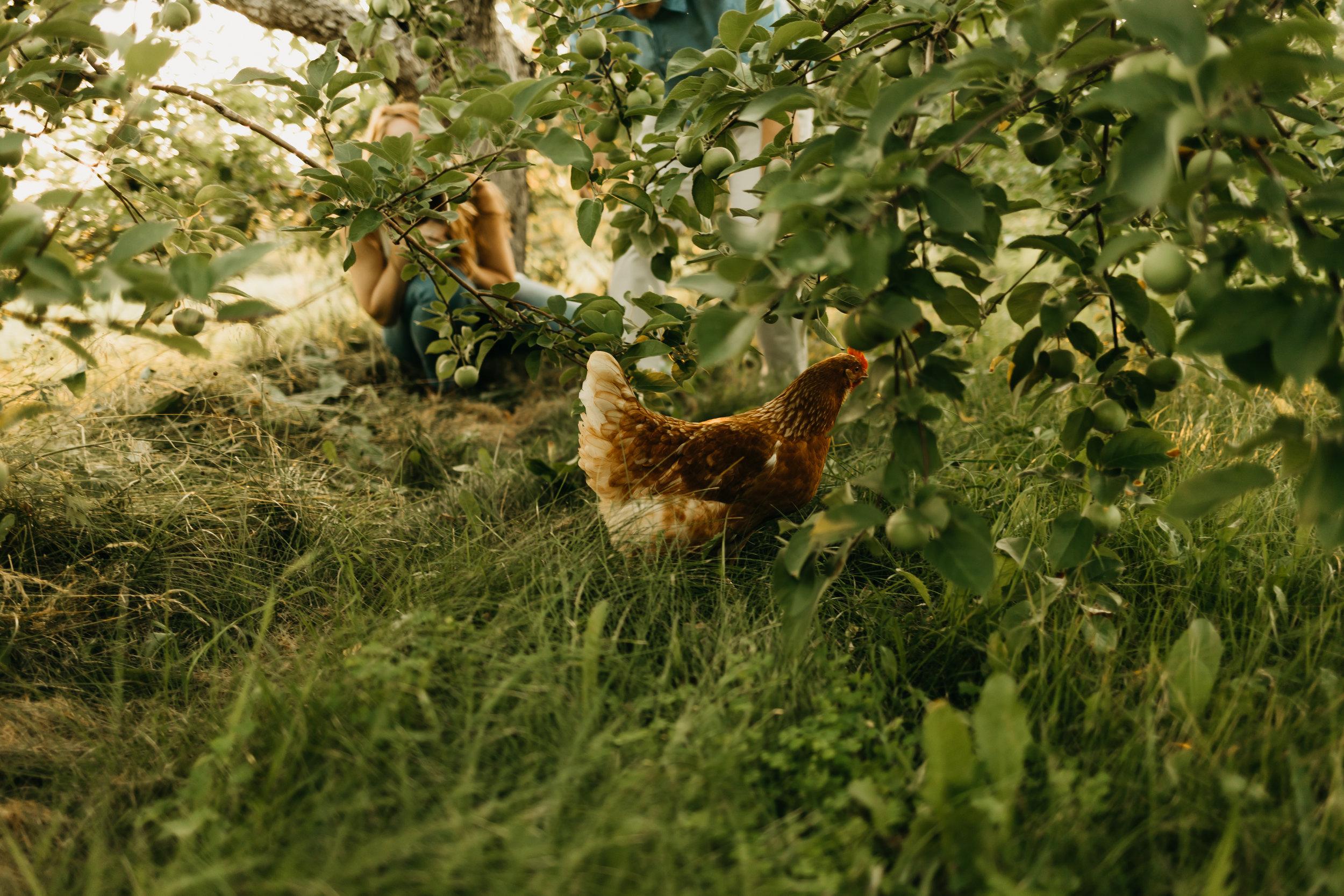 Engagement-shoot-Mont-saint-hilaire-québec-2344.jpg