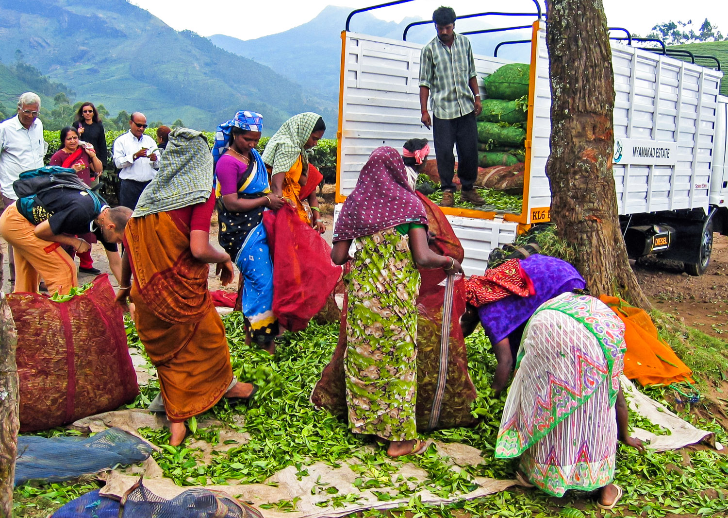 Tea pickers on the road near Munnar.   Image:   © Alan Williams