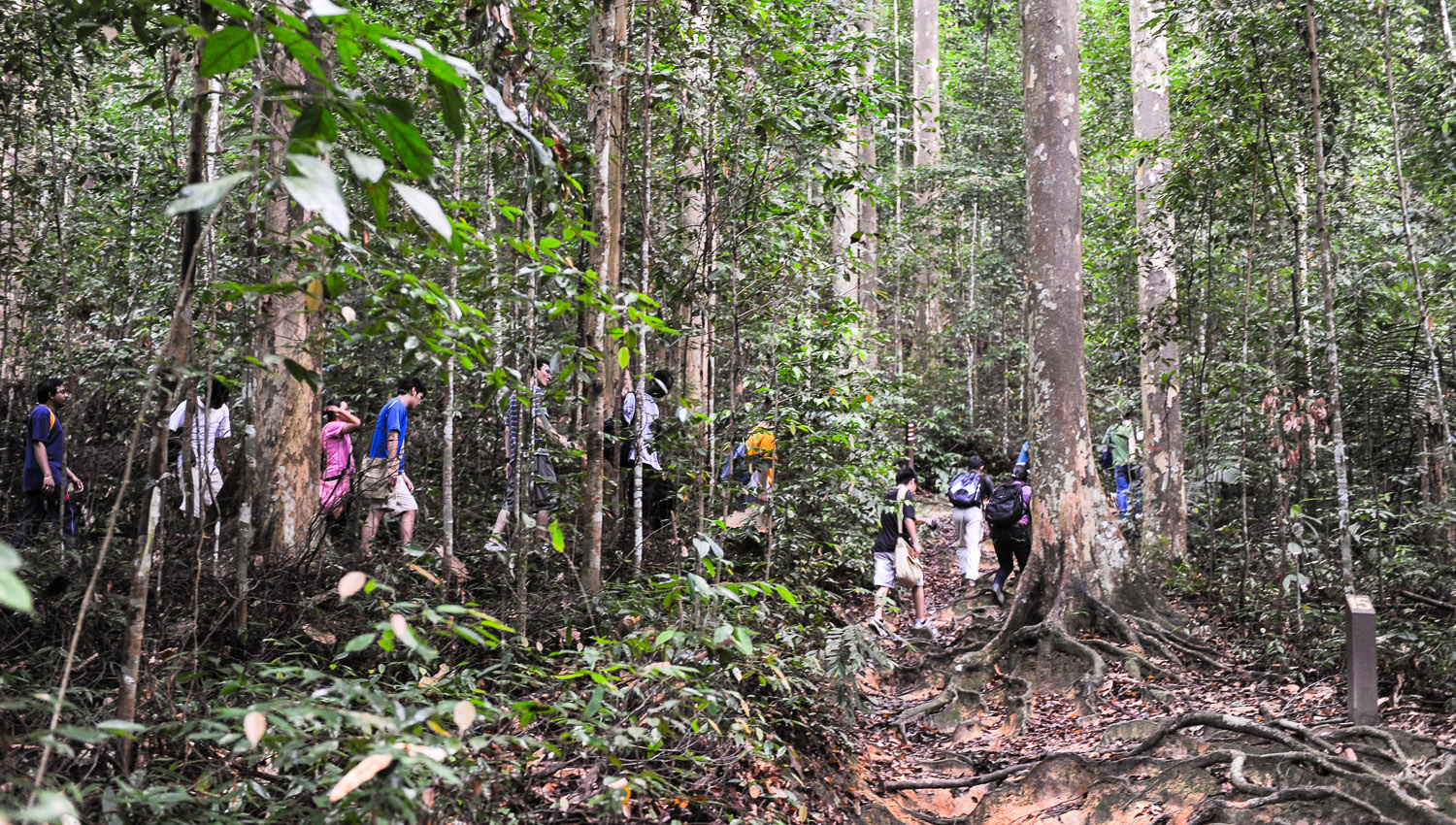 Hikers on a guided rainforest walk at FRIM. Image:  © David Astley