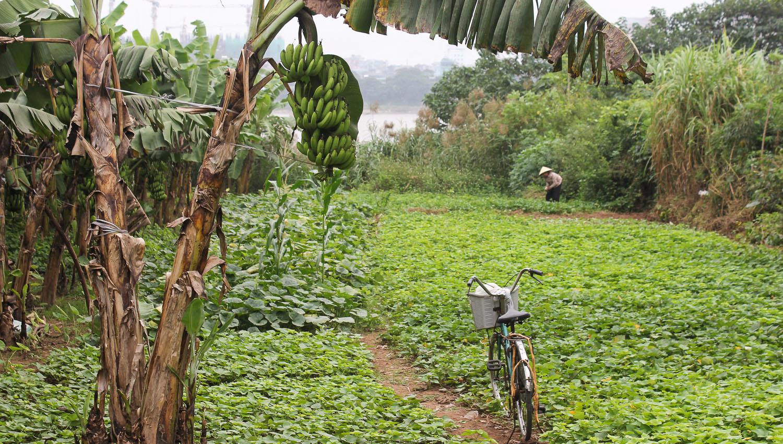 A woman tends to her crops on Bai Guia island. Image:  © Alan Williams