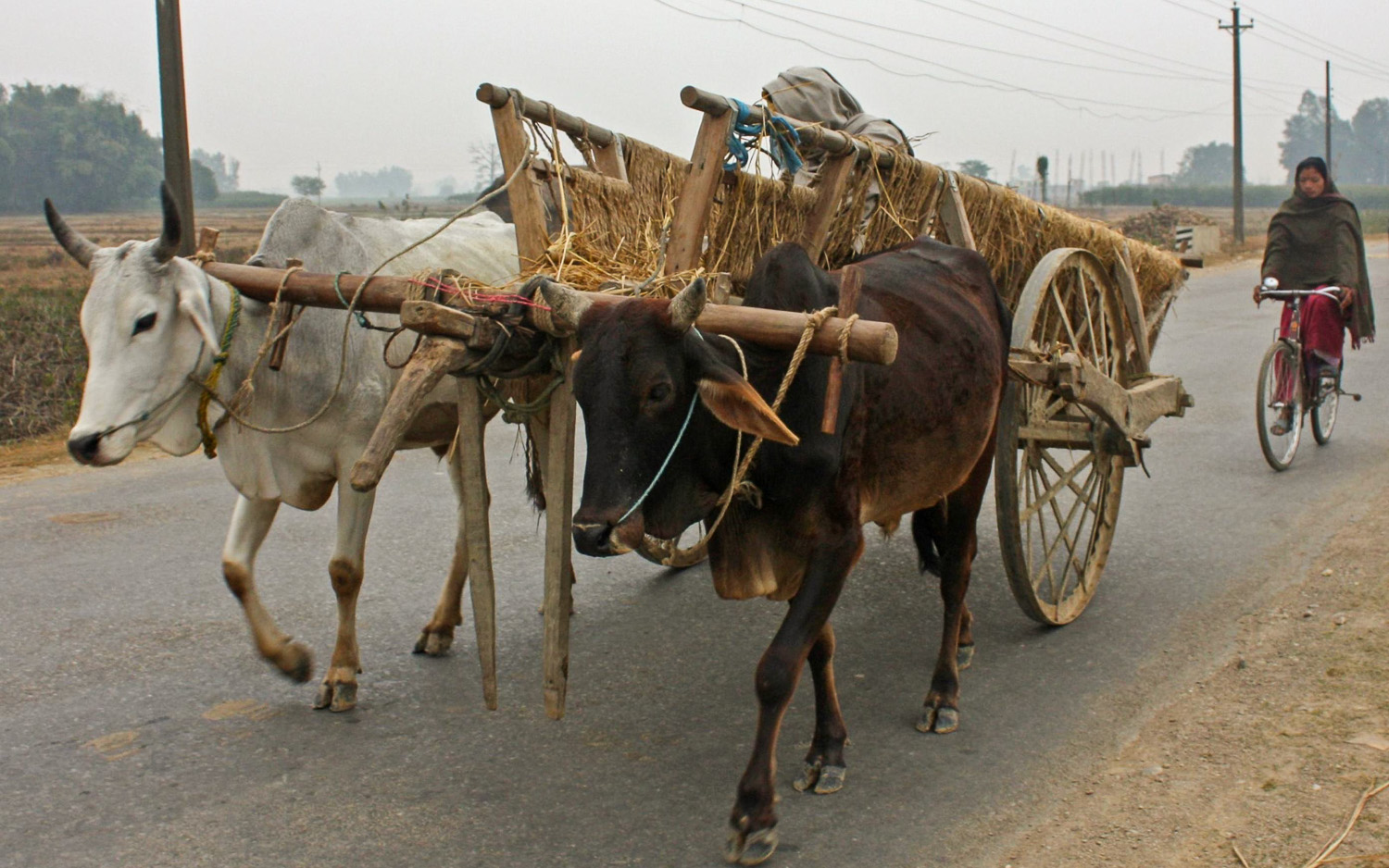 A bullock cart in Nepal with elaborately-spoked wheels. Image:  © Alan Williams