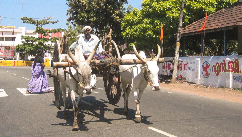 A bullock cart in Kerala in southern India. Image:  © Alan Williams