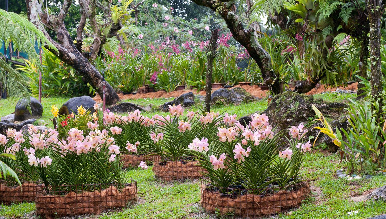Taman Orkid in Kuala Lumpur, Malaysia. Image:  © David Astley