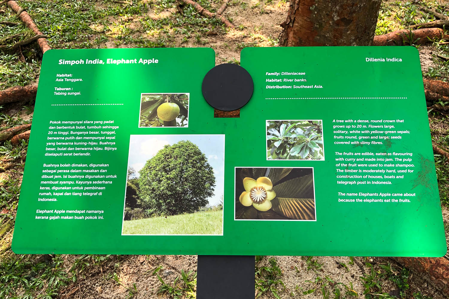 Tree information board in the KLCC Park. Image:  © Alan Williams