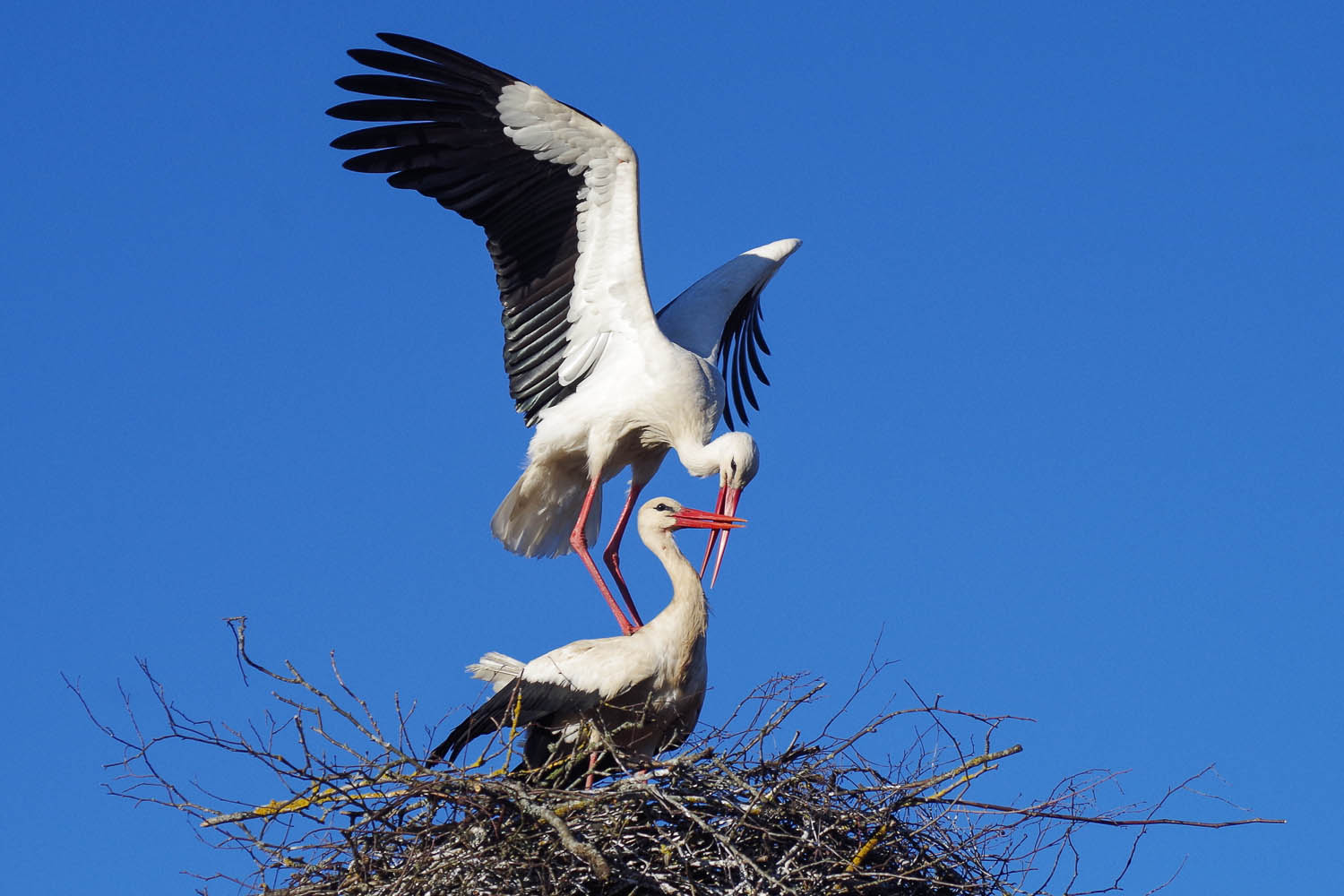 Storks are amongst the many water birds that migrate to Rameswaram. Image: © Kitijak