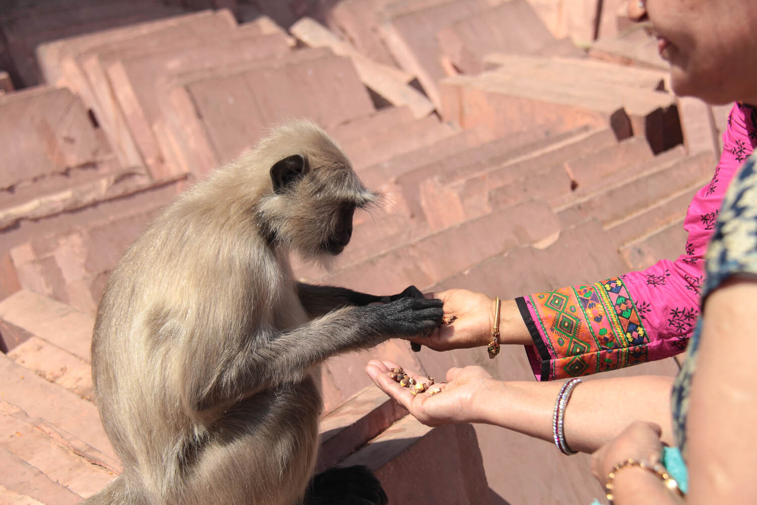 Monkeys are cute but can be rabies carriers too. Image:  © Arun Bhargava