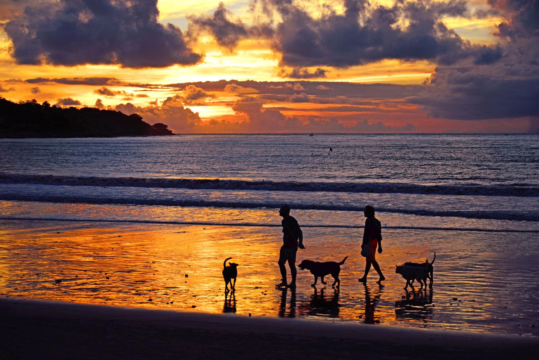 Dogs on Jimbaran Beach, Bali, Indonesia. Image:  Wai Ting Tan