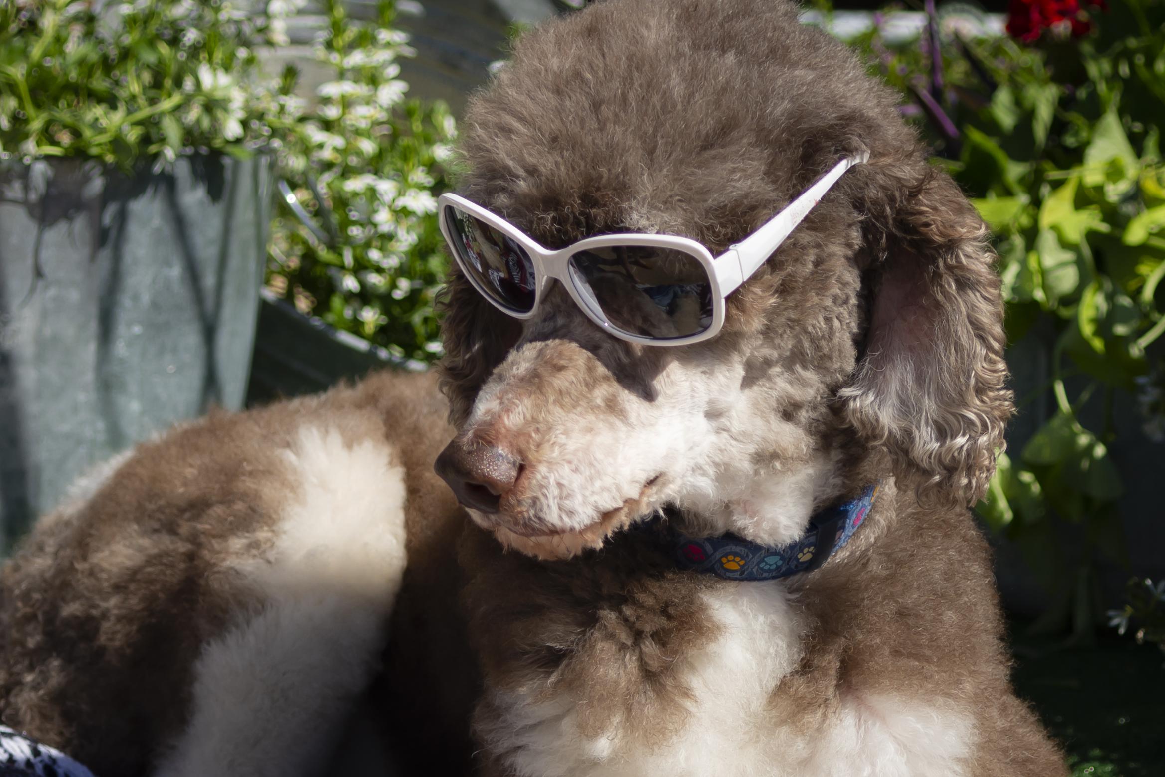 Beau Sunglasses-1.jpg