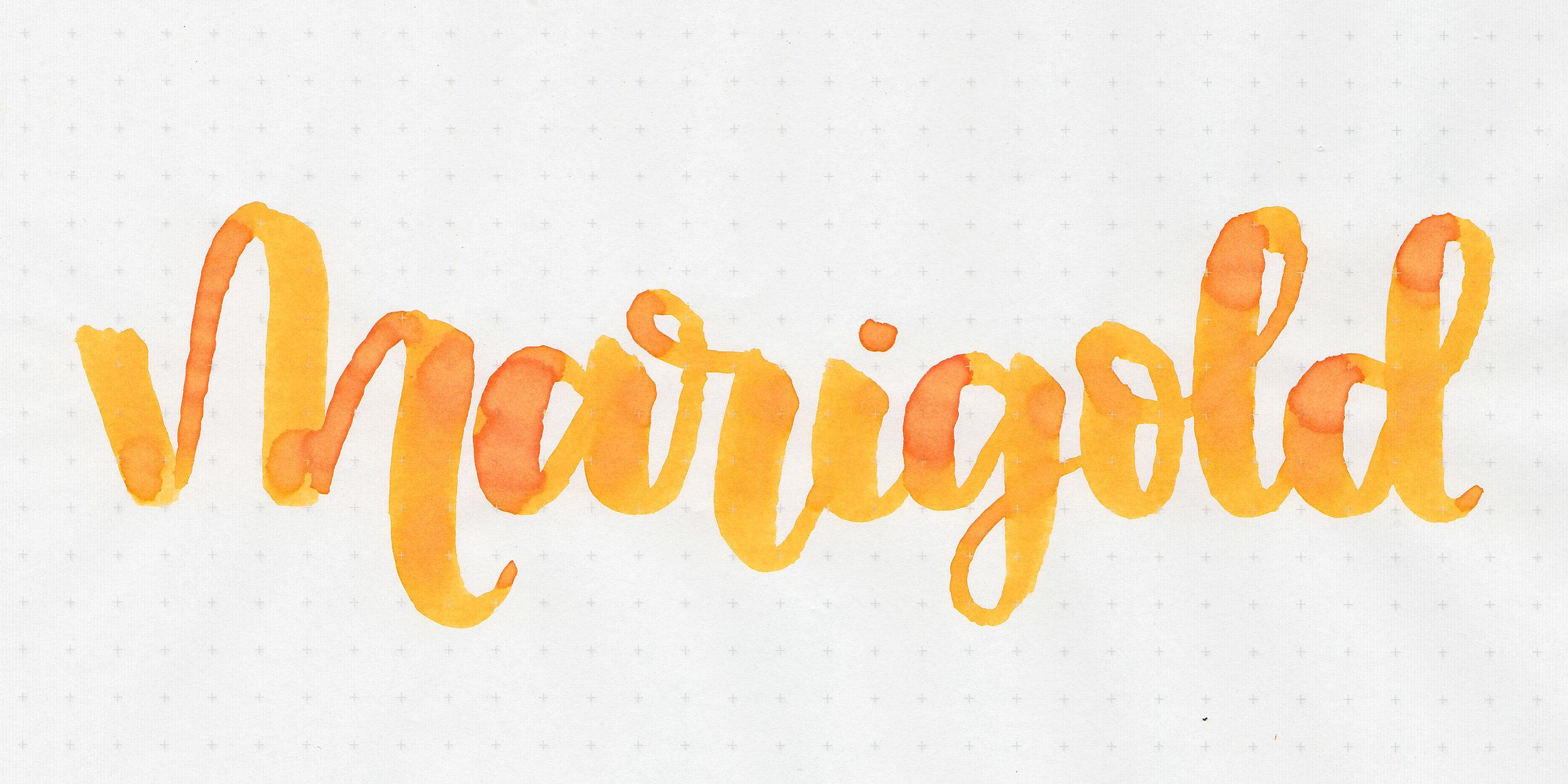 d-marigold-2.jpg