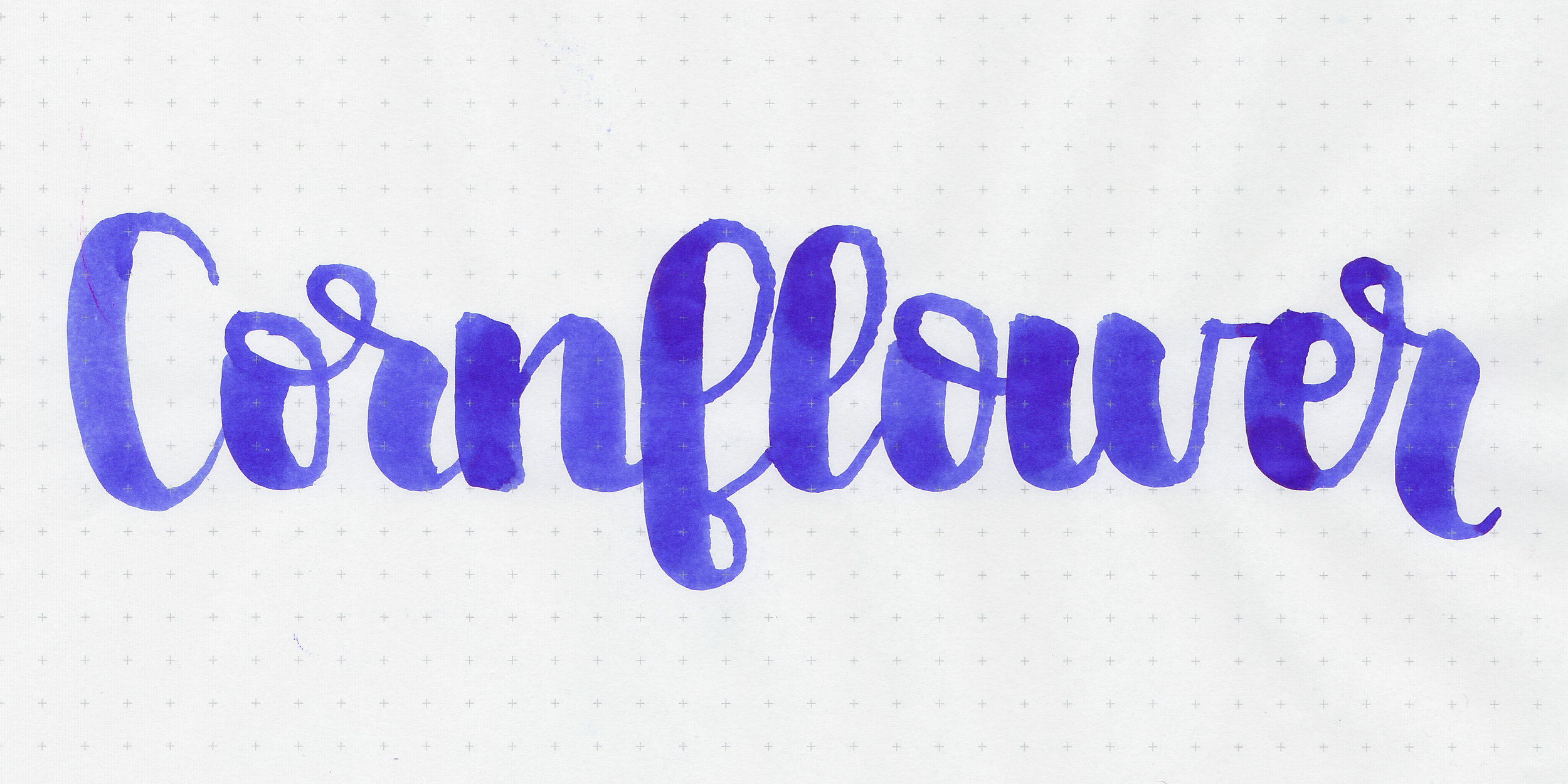 d-cornflower-2.jpg