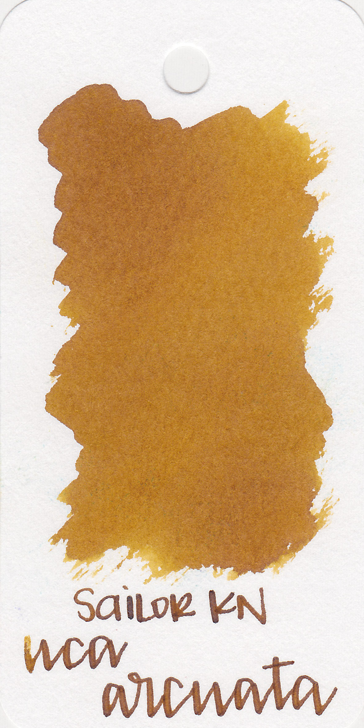 The color: - Uca Arcuata is a golden color, not quite yellow but not quite brown either.