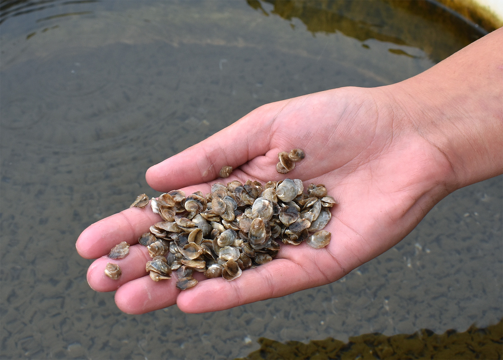 Oysters_0936-42-46.jpg