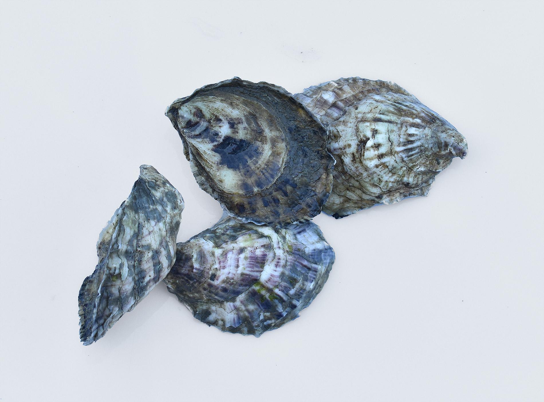 Oyster-Family_0896.jpg