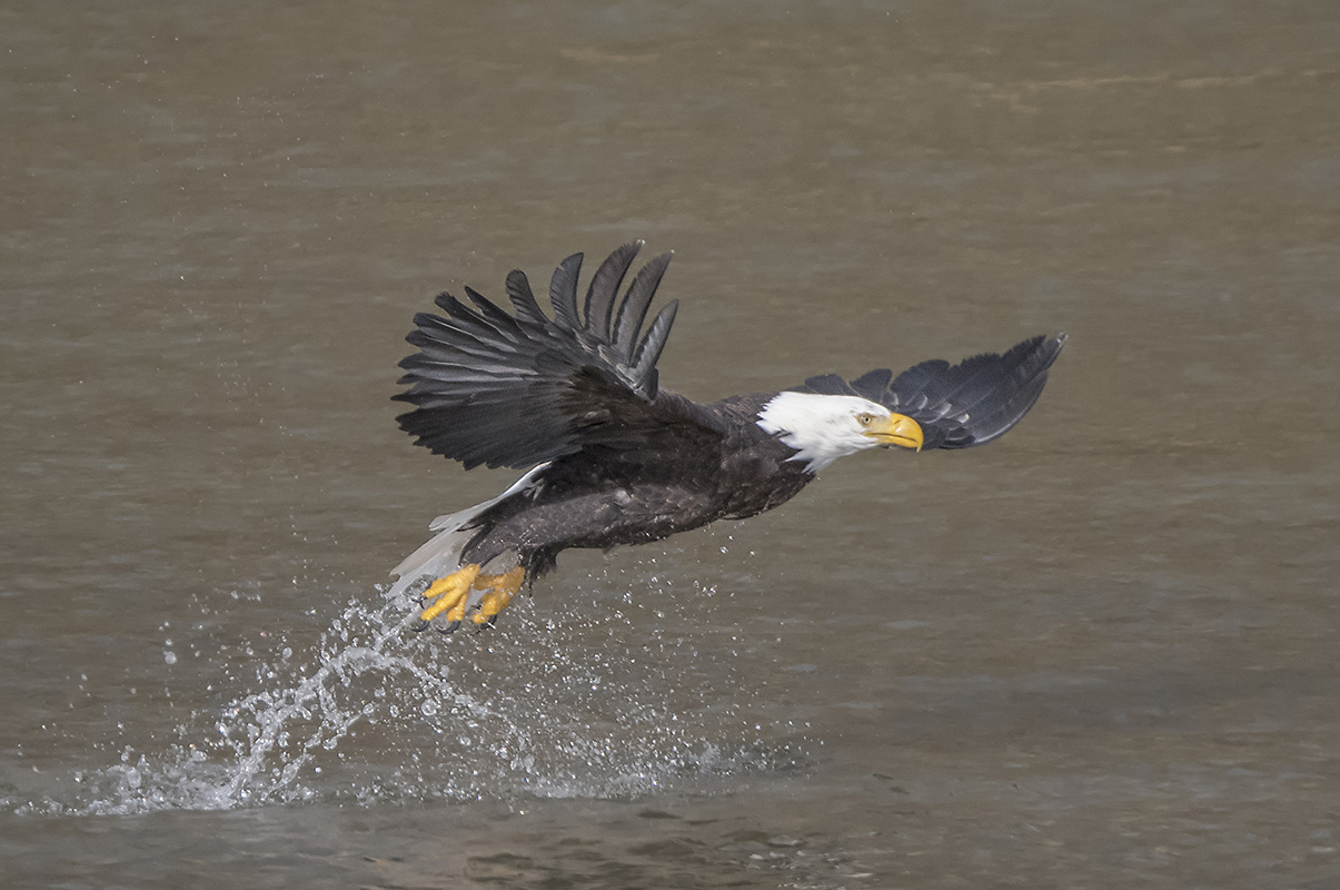 BC Birds Galore - British Columbia, Canada
