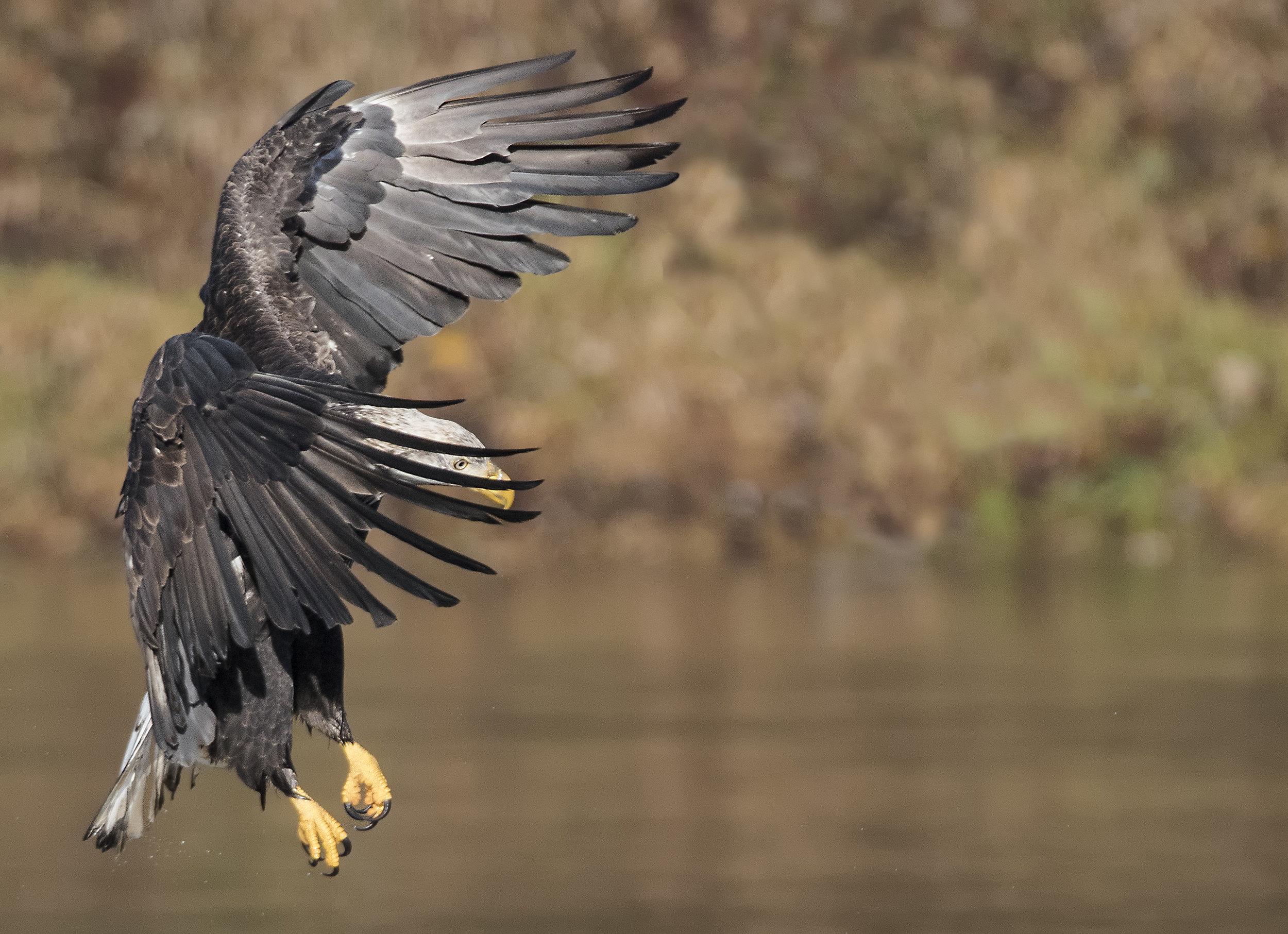 i see the eye of the bald eagle.jpg