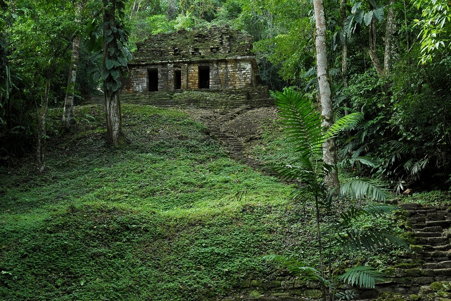 The jungle surrounding the Yaxchilan Ruins in southern Mexico are dense and full of biodiversity.