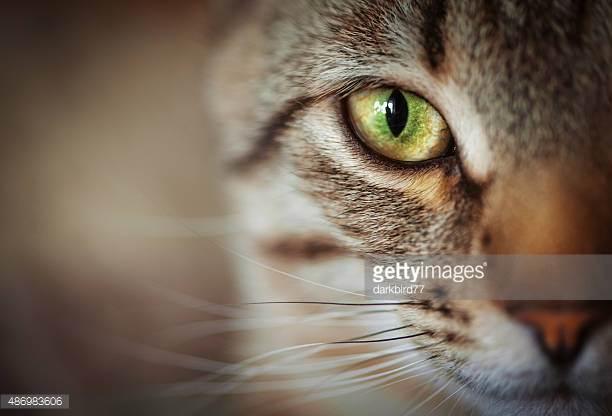 Photo by darkbird77/iStock / Getty Images