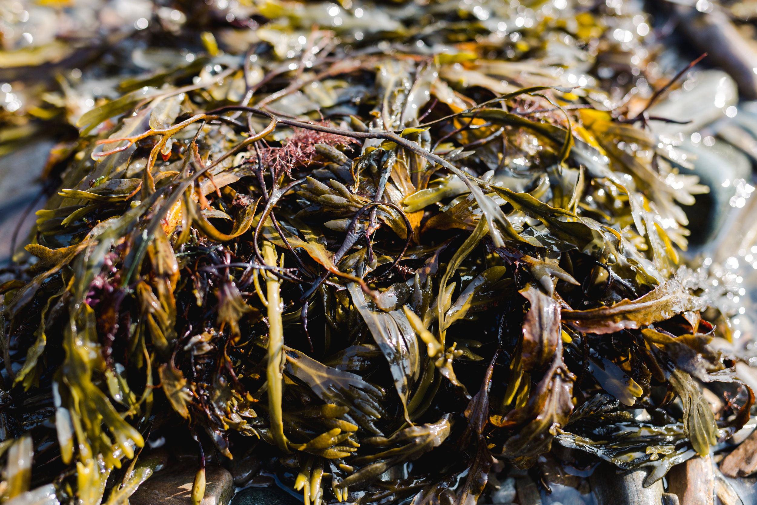 Big Tree Foods and Eventide Oyster Co Clam Bake -1.jpg