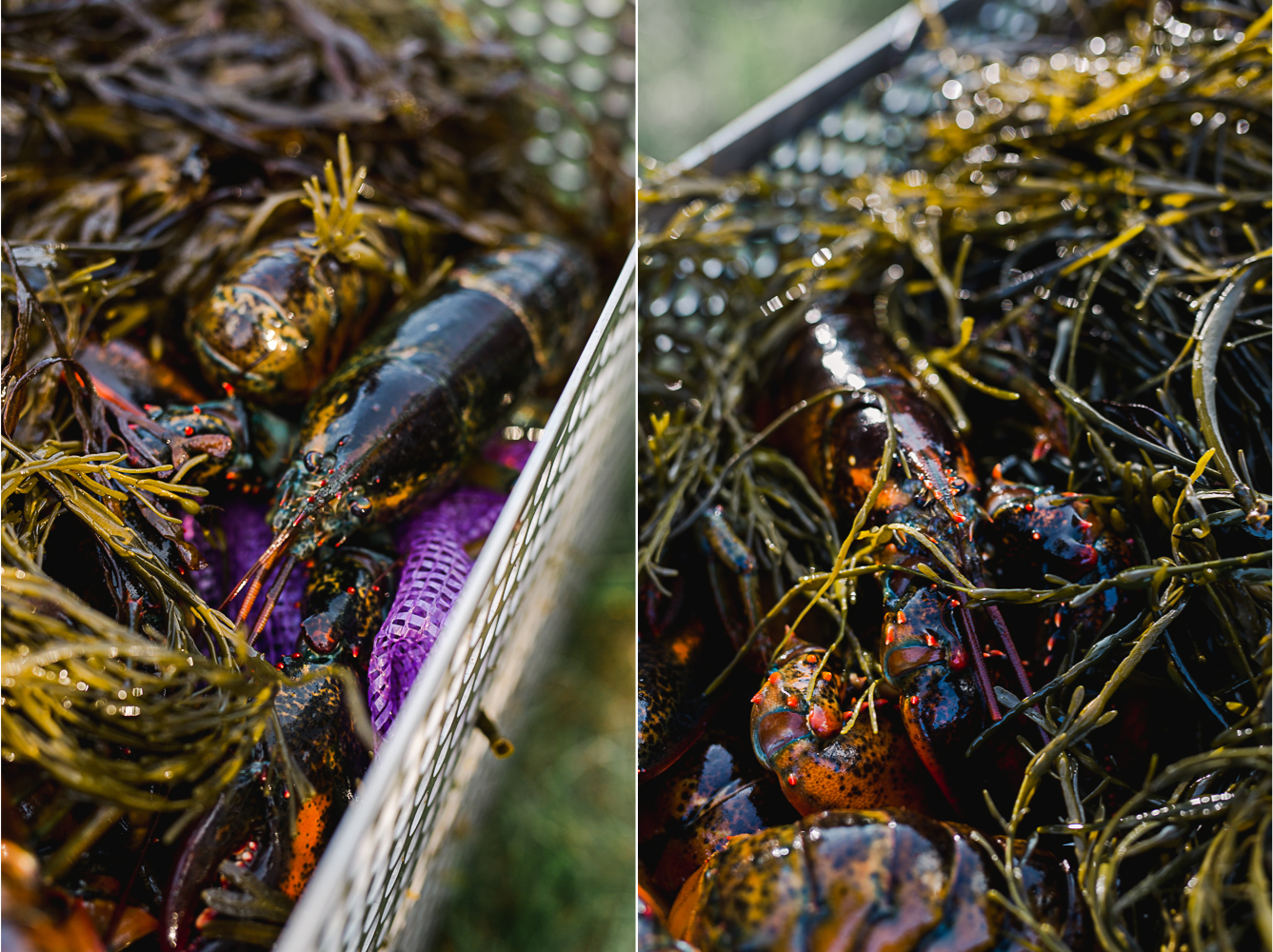 Big Tree Foods and Eventide Oyster Co Clambake 3.jpg