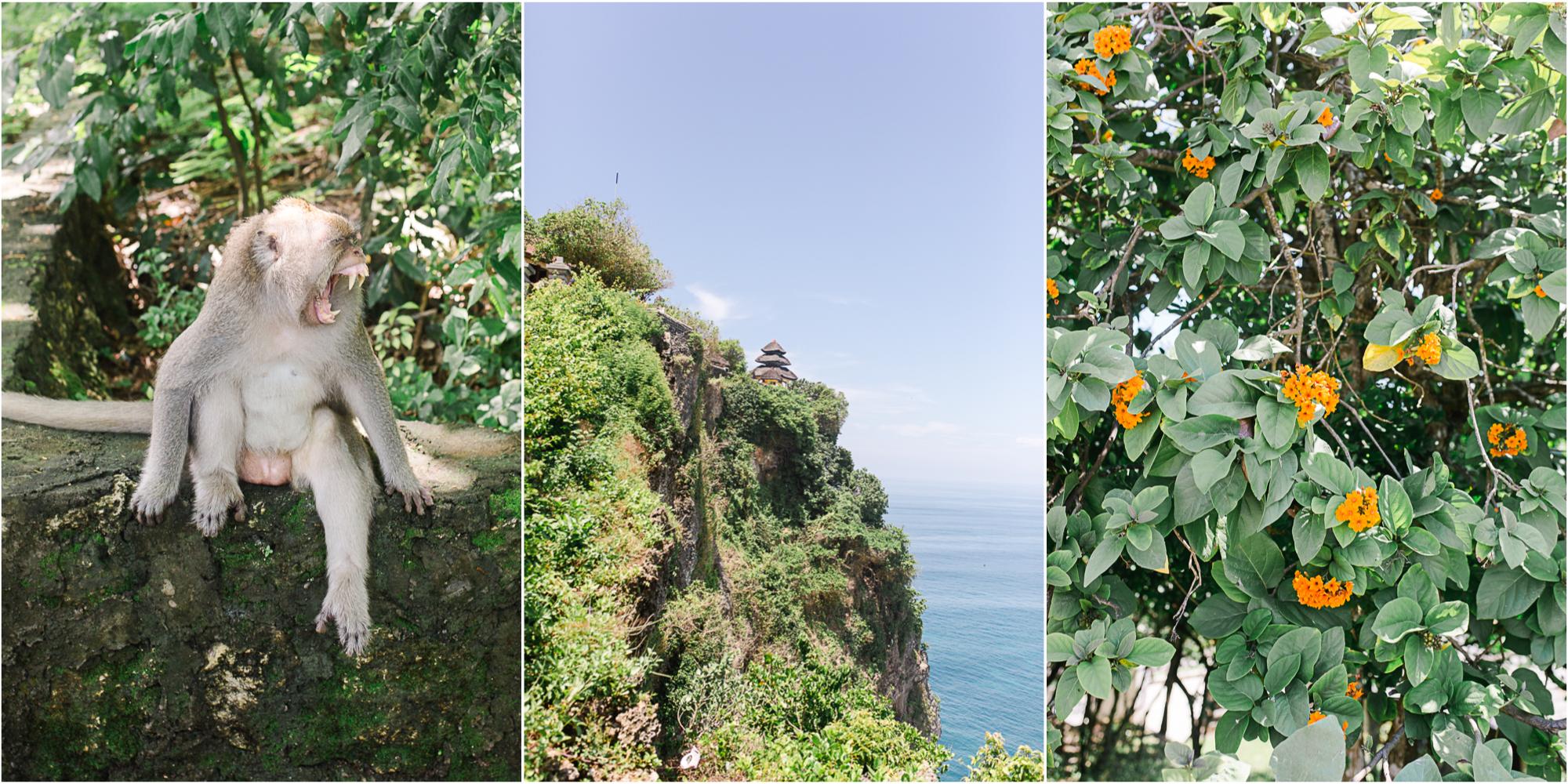 Maine Wedding Photographer Travels to Bali 12.jpg