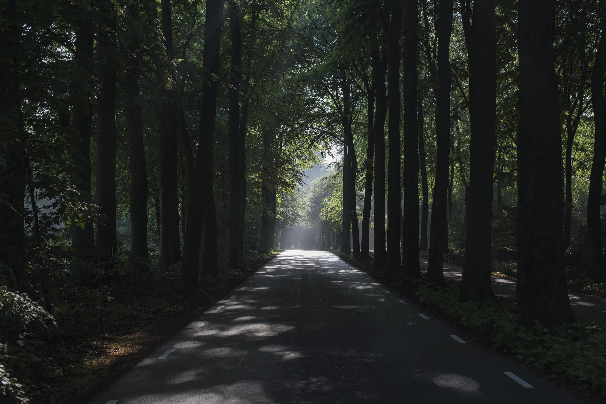 259656-© Yorit Kluitman - Gemeente Ermelo-68c64c-original-1506604986.jpg